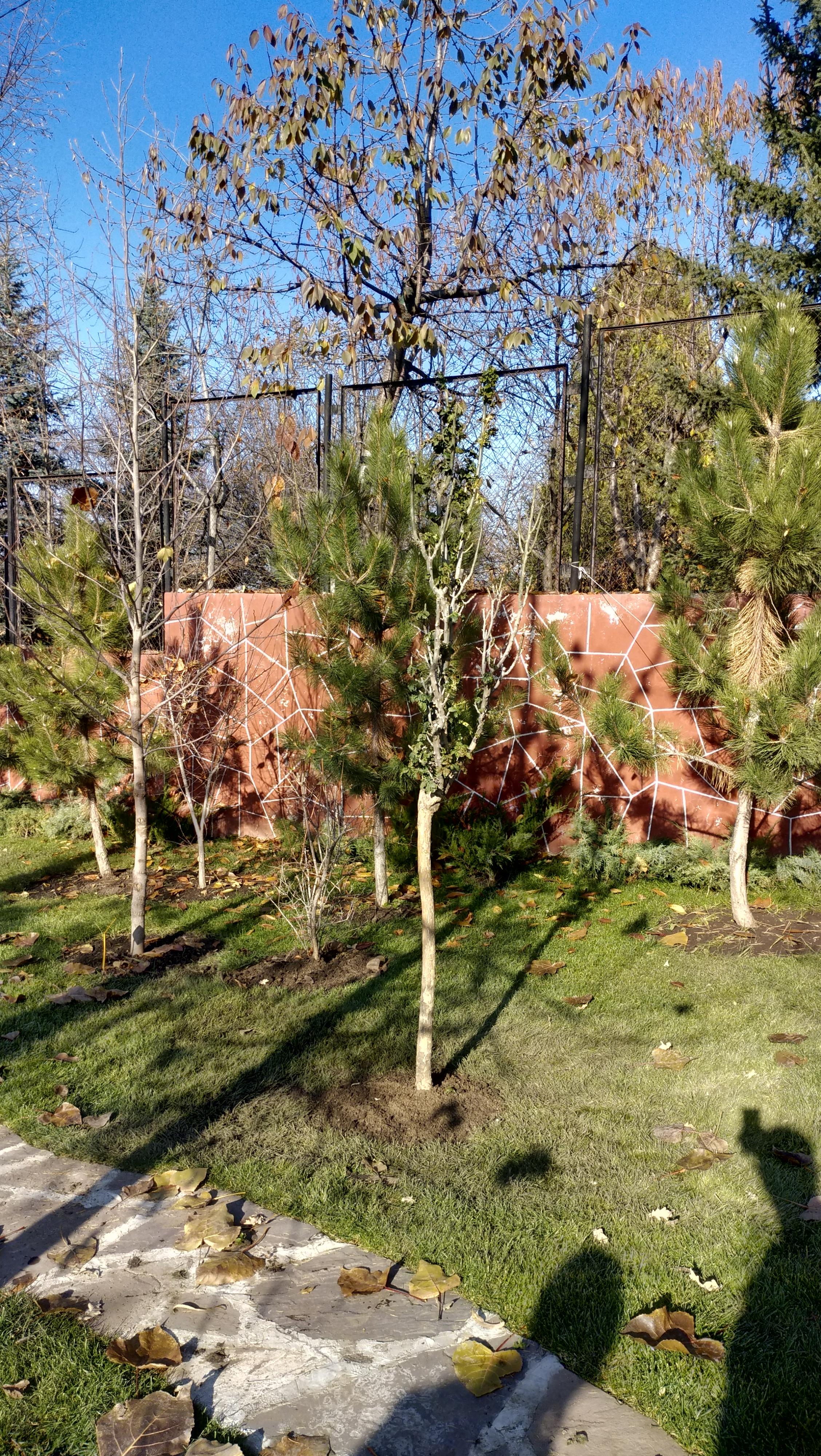 Тендер по санитарной обрезке деревьев в Алматы