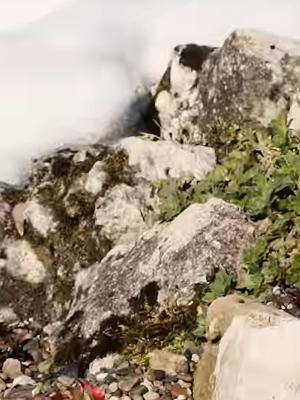 создание альпийских горок в Алматы