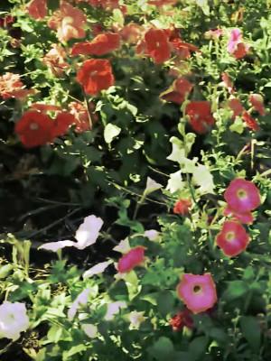 Создание цветников в Алматы